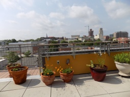 Shared Rooftop Patio View